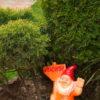 Садова фігура Гном великий з табличкою